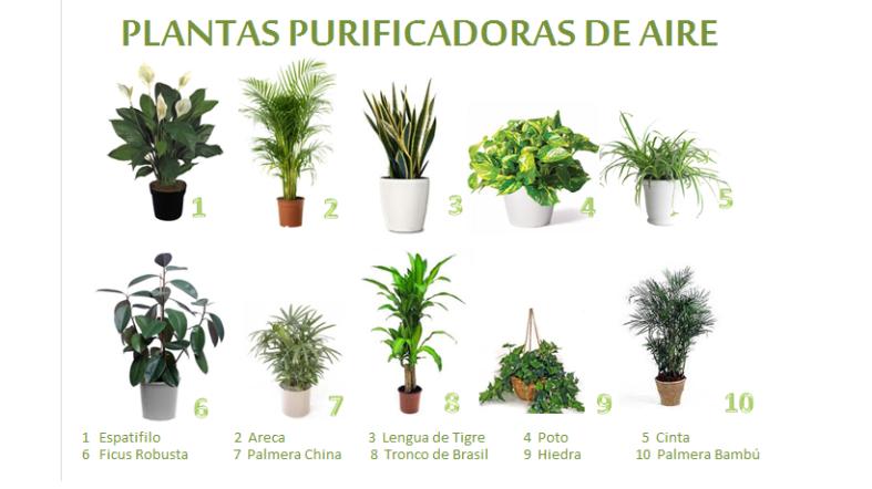 Mejores plantas de interior mundodeceleste - Mejores plantas para interior ...